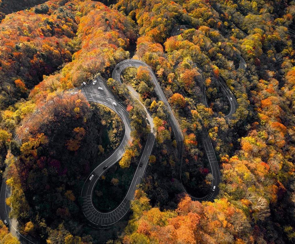 Rừng cây lá vàng trên cung đường 48 khúc cua ở Nhật Bản
